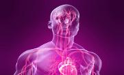 крообращение остеопат